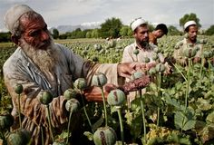 AFGHANISTAN - RUSSIA - USA   A new cold war between Moscow and Washington over Afghan opium - Asia News