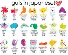 guts-in-japanese-kanji #learnjapanese