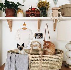 Adorable cats + nostalgic trinkets