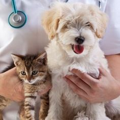 Transport pets with airvets the leading pet travel experts and transport pets with airvets the leading pet travel experts and worldwide service provider in dallas texas we will provide you the best service p sciox Gallery