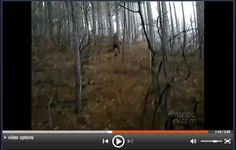 Amazing Weekend watching: Ukrainian dancing doc in Roncesville  Bigfoot in Ukraine | Ukrainian Canadian picture
