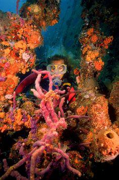 Diving in Aruba