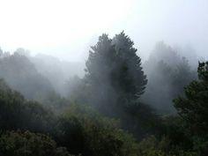Parque Garajonay (Canarias)