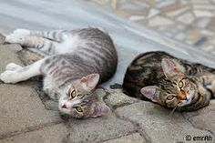 Two #Istanbul street #cats pose for a photo.