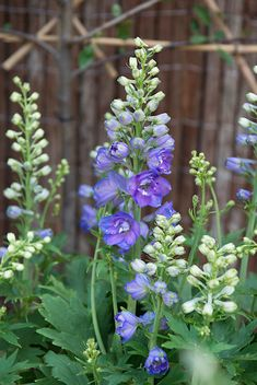 Top 10 picking flowers with a little sun and your favorite perennials you can make your own picking garden. Flower Garden, Picking Flowers, Plants, Purple Garden, Urban Garden, Beautiful Flowers, Perennials, Modern Garden, Modern Garden Design