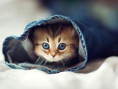 あどけない表情がたまらないっ! 世界一カワイイと評判のネコ「デイジー」                                                                                                                                                                                 もっと見る