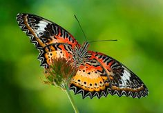 Check out all the beautiful butterflies you could bring to your garden at buyrareseeds.com
