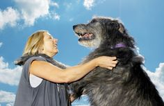 10 Reasons Big Dogs Are the Best Dogs