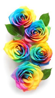 Rainbow Roses, Flower Ideas, Aesthetic Iphone Wallpaper, Amazing Flowers, Iphone Wallpapers, Rainbows, Anime, Beautiful, Paintings Of Flowers