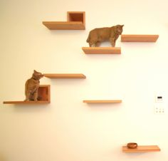 Stepping-stone shelves allow a cat to move between rooms in The Cat House through high level openings, without using the landing and stairs.