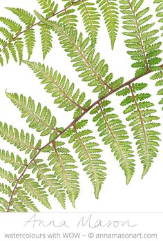 The tiny detail of the leaves capture the movement in this delicate fern. Can you imagine it swaying in the breeze?