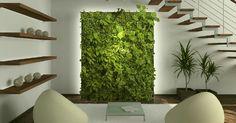 Mur végétal intérieur : un bout de nature dans son intérieur