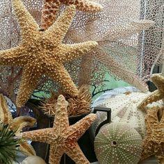 Reach for the stars! www.SeashellsbySeashore.etsy.com