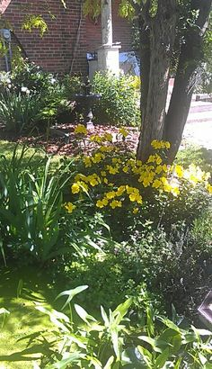 At the pond. Pond, Yellow, Garden, Plants, Water Pond, Garten, Flora, Plant, Lawn And Garden