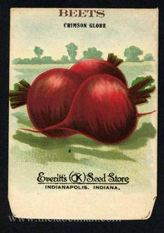 EVERITT'S SEED STORE,  Beets 265, Vintage Seed Packet, spot