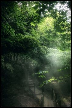 A bridge in the woods