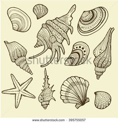 Vector Illustration of various sea shells doodled in a vintage style. Conch shell, spiral, clam, sea star, and others.