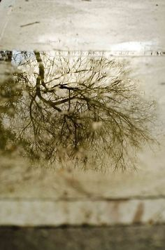 Reflections in the puddles in Westgarth (14/07/12) Thought I would slowly go through my blog and reblog some of my early...