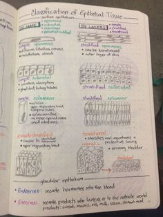 Classification of epithelial tissue Life Hacks For School, School Study Tips, Tissue Biology, Nursing School Notes, Ob Nursing, Nursing Schools, Basic Anatomy And Physiology, Skin Anatomy, Medicine Notes