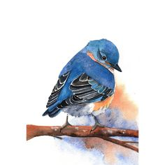 Bluebird Painting -B029-  Archival Print of bird watercolor painting 5 by 7 print. $15.00, via Etsy.