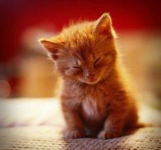 Kitten sleeping while sitting up