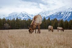 See the country through the lens of photographer Zach Baranowski, and you'll never see Canada the same way again. Jasper Alberta, Canada 150, Camel, Journey, Landscape, Country, Animals, Image, Beauty