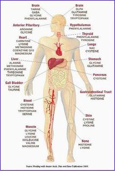 Amino acid body chart.....