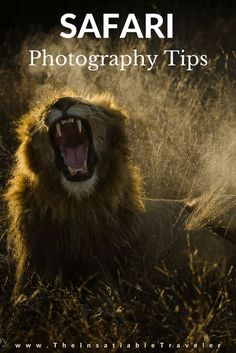 Tips on how to take Amazing African wildlife photos. #safaritips #Photographytips #safari #photography #WildlifePhotography #Africa