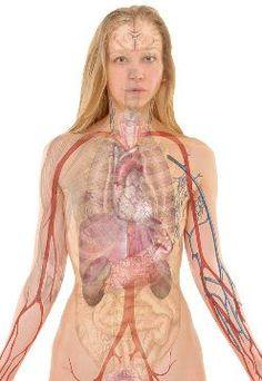 Moje pravdy - Jak detoxikovat každý orgán a už nikdy nebýt nemocný ani unavený