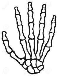 Resultado de imagen para como dibujar huesos en las manos
