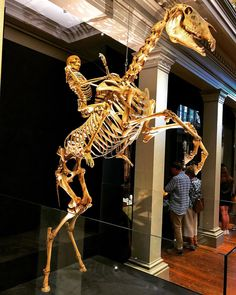Ghost rider  . . . . #ghost #ghosts #ghostrider #ride #rider #rides #skeleton #skeletons #skull #skulls #bone #bones #man #horse #museum #awesome #photooftheday #instagood #instadaily #instamood #igers #iphonesia #display #dead #death #supernatural #beautiful #beauty #ugly #amazing