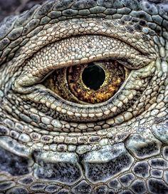 The Eye by Carlos M. Almagro