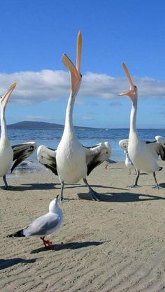 Summer Favorites - Exploring the beach. Pelicans