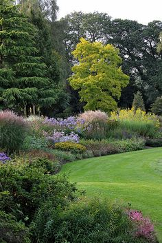 looks like a Princeton Gold Maple tree among that fabulous perennial bed.