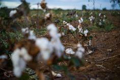 Campesinos paraguayos se movilizan contra cultivos transgénicos de transnacionales