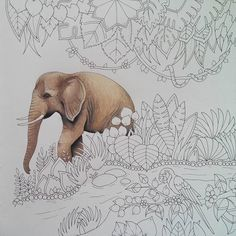 Return to Magical jungle #magicaljungle #magicaljunglecoloringbook #johannabasford #johannabasfordmagicaljungle #coloringforadult #adultcoloring #adultcoloringbook #coloringbookforadult #coloringbook #antistress #antistresscoloringbook #prismacolor #prismacolorpremier