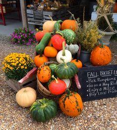 Cullipher Farm's homegrown pumpkins¡