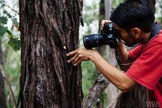A macro-photography collection of (mostly) native Hawaiian flora and fauna by Hawaii nature photographer Francis Joy.