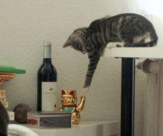 Iuuupiiiii! Mais Um Dia de Gato!                              …