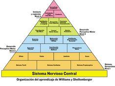 piramide-desarrollo- williams-shellemberger