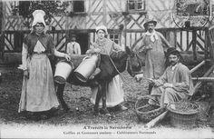 A quoi servait l'Ane Normand autrefois ? Carte-postale-ANbis