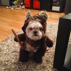 """15 Dogs Celebrating Star Wars Day Who Say, """"May The Force Be With You."""" - BarkPost"""