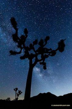 Celestial Witness. Joshua Tree