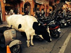 Discover the Heart of India Tour March 2014 - Cow Parking in Delhi