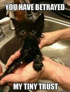 Awe! Poor kitty!  You'll be soft and fluffy again before you know it!