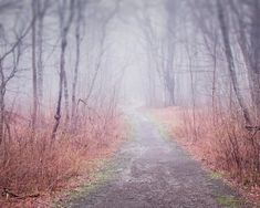 """Maine Landscape Photography Print """"""""Winding Path in Fog"""""""""""
