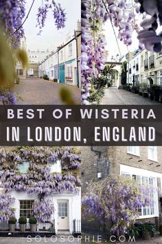 best of wisteria in london travel guide for the spring