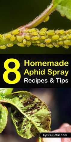 Controlling Aphids: 8 Homemade Aphid Spray Recipes and Tips Discover 6 amazing homemade recipes and tips for a homemade aphid spray for organic pest control. If you have aphids and spider mites on your. Garden Bugs, Diy Garden, Garden Pests, Garden Shop, Green Garden, Herb Garden, Lawn And Garden, Organic Vegetables, Growing Vegetables