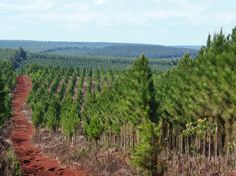 Biomass in Argentina: The giant feels greener