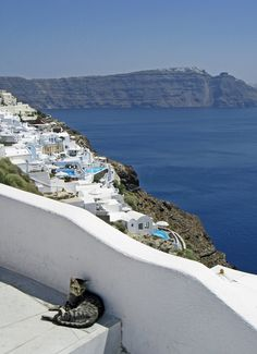 Santorini Cat, Greece. when cats die and go to heaven...they end up in a puddle of sunlight in greece.